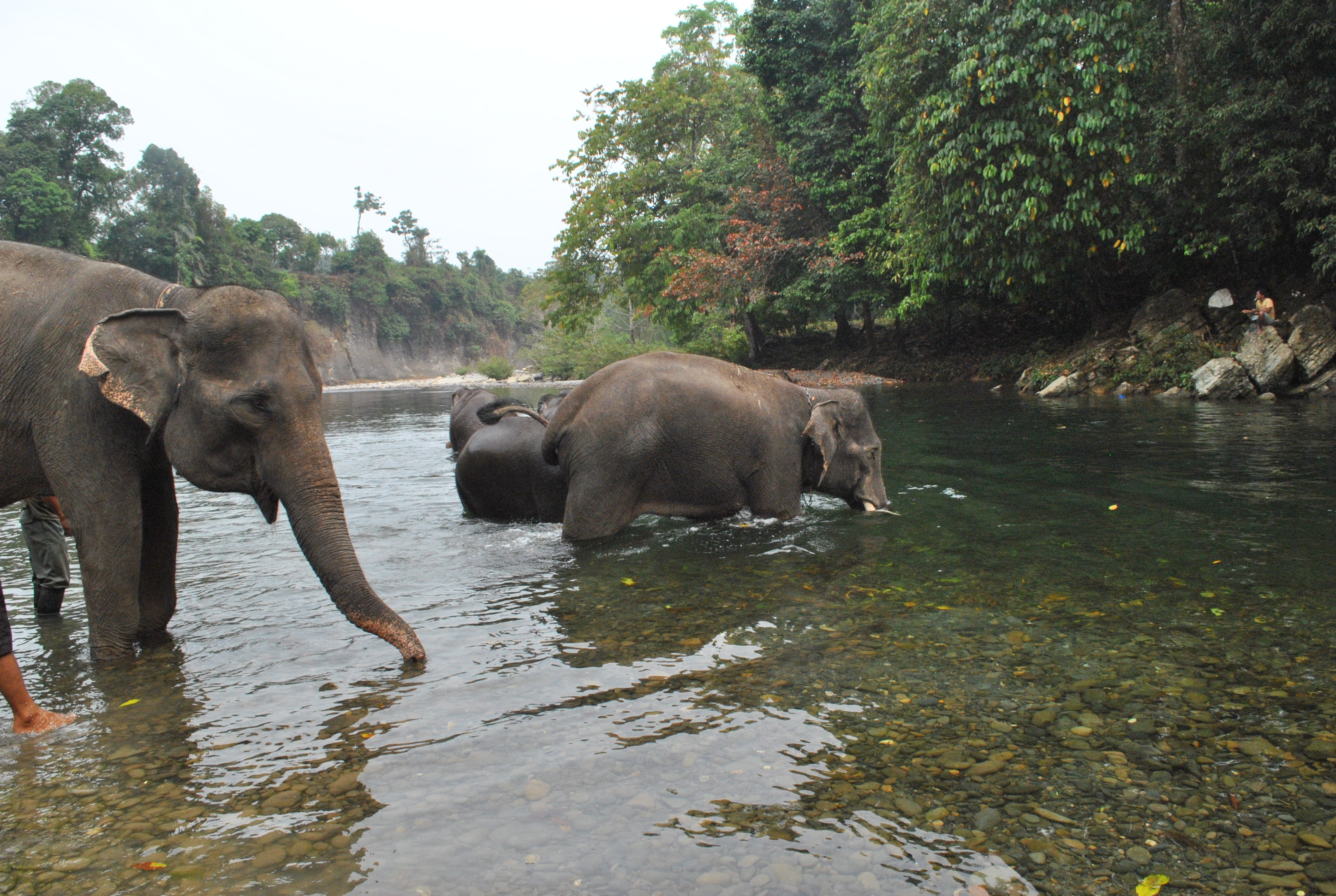 The Most Awesome Travelling Moment In 2014 2 Save The Elephant